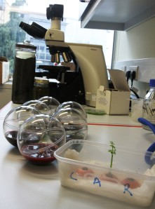The lab at C-Mould. In the foreground a genetically modified carrot top (a mini GM Christmas tree), and BioDomes. At the back our Nikon Eclipse Ni-U DIC Microscope, a hay infusion and a Winogradsky column