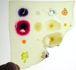 Pigmented bacteria converted into a glass-like film for projection and stained-glass.