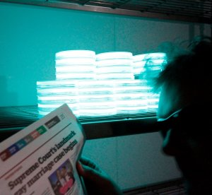 Yes, that's me reading a newspaper using just the light Photobacterium phosphoreum HB.